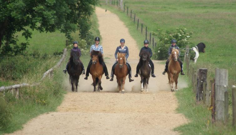 Unterwegs mit Pferd rund um Cuxhaven